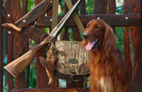 Flying with Guns and Gundogs