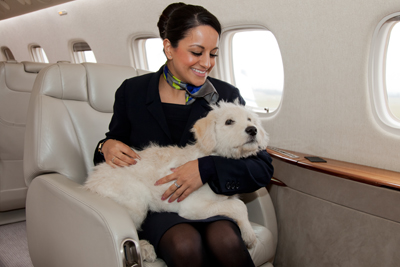 Pet flights by private jet